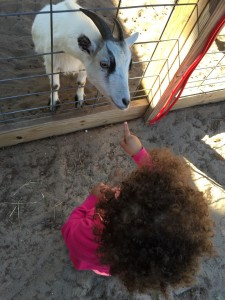 E checking out the goats (1)