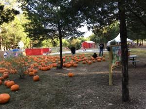 E exploring the pumpkins