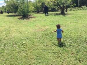 E roaming around the orchard (1)