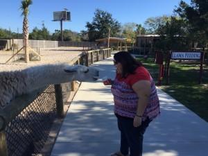 becky feeding the llama (3)