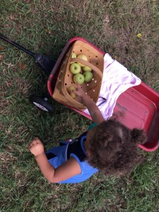 e putting apples in the basket