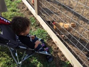 gentry's farm 2015 (2)